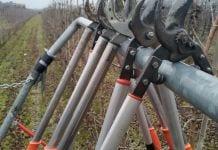 Sad, sekatory - zimowe cięcie drzew owocwych