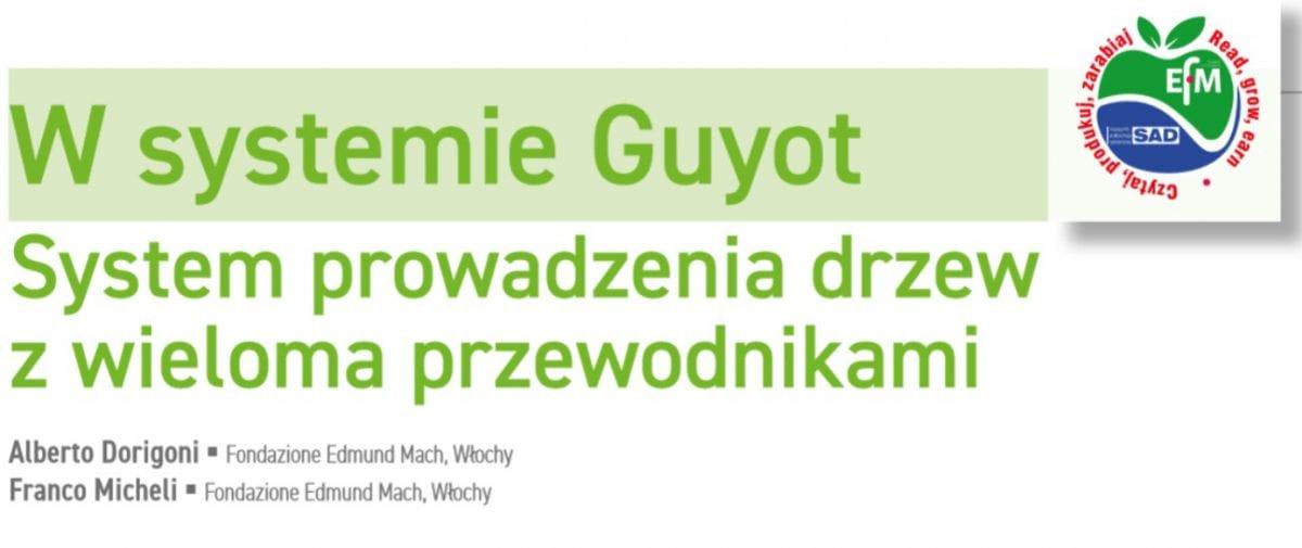 W systemie Guyot