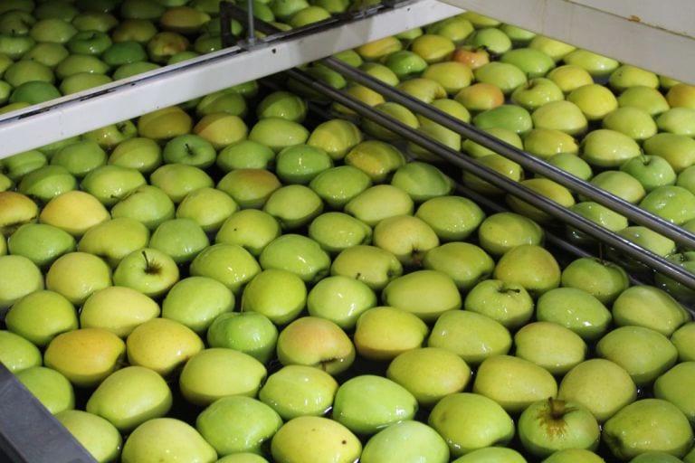 Ceny jabłek deserowych – rosną zamówienia ze strony marketów