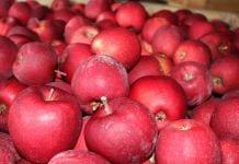 My obawiamy się importu węgierskich śliwek i czereśni, oni naszych jabłek