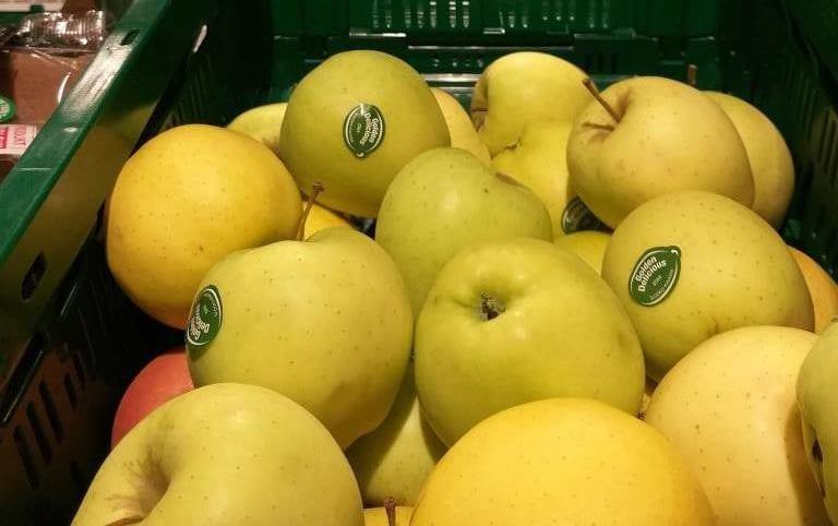 Odmiana jabłek Golden Delicious – charakterystyka