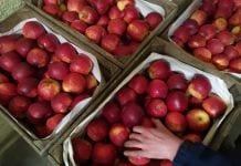 Jabłka przygotowane na rynek hurtowy