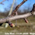 Pękanie pąków - Gala Must - 15.03.2020