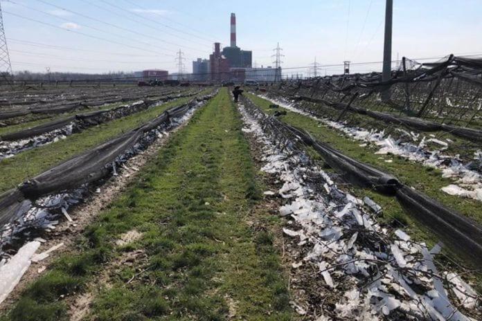 przymrozki 2020 zniszczony sad w austrii