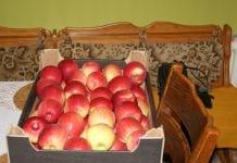 sprzedaż bezpośrednia jabłek od sadownika