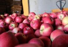 stany magazynowe jabłek w polskich chłodniach marzec 2020 wapa