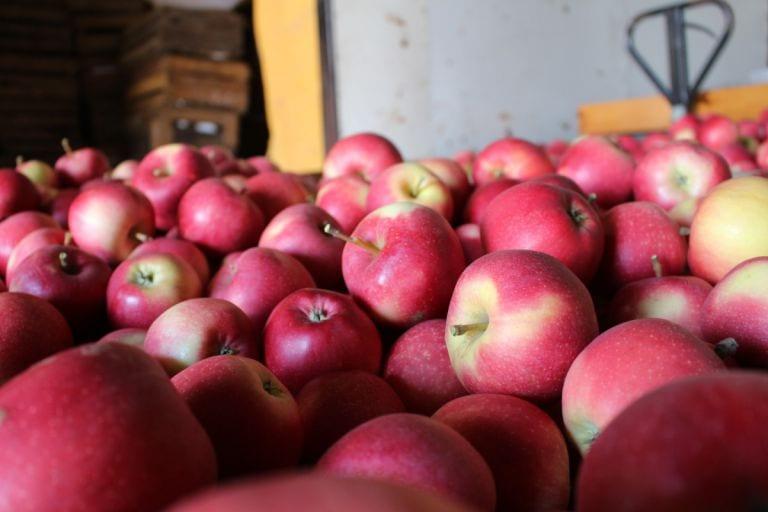 Ile jabłek mamy jeszcze w chłodniach?