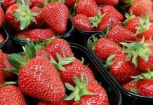 Sprzeczne informacje o włoskim sezonie truskawkowym