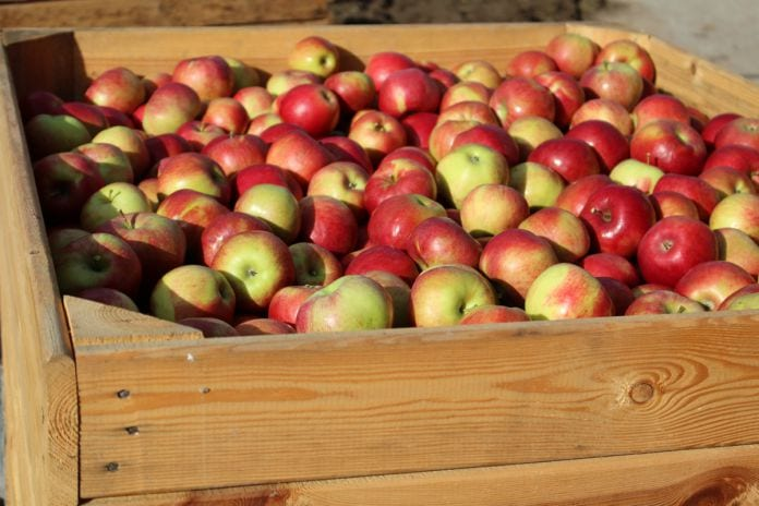 ceny-jablek-2020