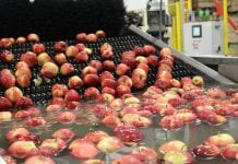 wysokie ceny jabłek