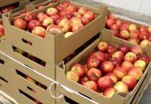 Większe zamówienia jabłek – pośrednicy podnoszą ceny