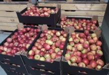 Ceny jabłek oszalały?