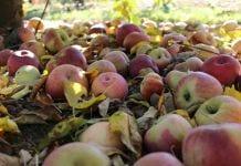 ceny koncentratu jabłkowego