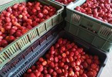 ceny owoców na mrożenie