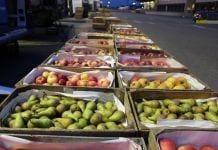 Na Zjazdowej sadownicy dyktują ceny – Konferencja już 100 złotych