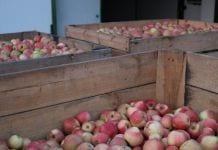 Kupił jabłka za wagę w skrzyni – został oszukany