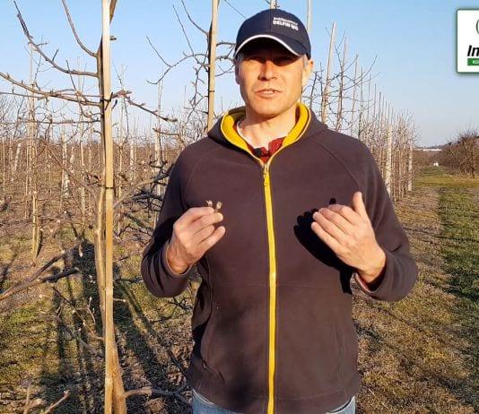 Komunikat sadowniczy – Robert Binkiewicz, Agrosimex 07.04.20