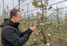 Sady zaczynają kwitnąć – komunikat sadowniczy Mateusz Nowacki, 29.04.2020