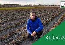 Truskawka i borówka w warunkach stresowych – komunikat jagodowy Agrosimex 02.04.20