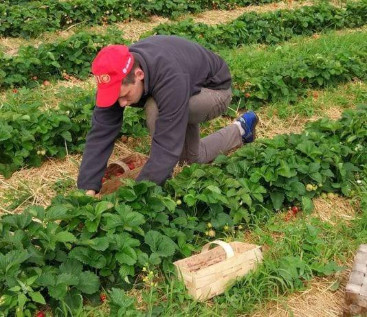 Ukraińcy w gospodarstwach: aktualne wytyczne dotyczące zatrudniania