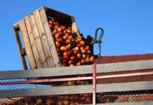 Droższe jabłka deserowe ciągną ku górze ceny suchego przemysłu