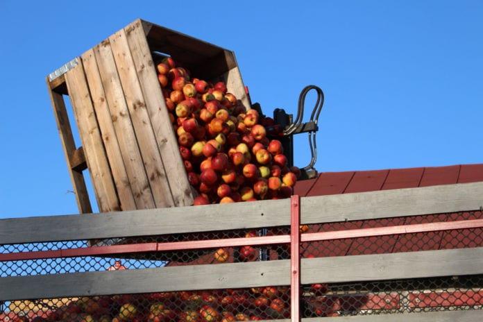 jabłka przemysłowe ceny 2020