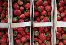 Polacy najbardziej lubią truskawki i jabłka