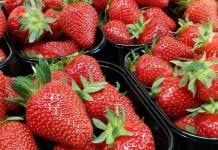 Do Polski dojechała również holenderska truskawka – import nie zwalnia