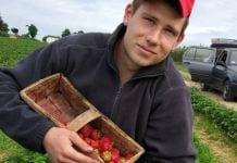 Weź udział w zbiorach truskawek – zarobki są zachęcające!