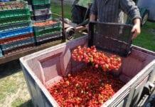 Döhler podał minimalne ceny skupu owoców w 2020 roku