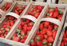 ceny truskawek