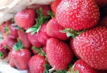 Minister: Wiosną normalny jest wysoki poziom cen truskawek