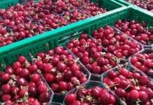import owoców