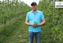 Komunikat sadowniczy – Robert Binkiewicz, Agrosimex, 13.05.2020
