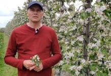 Komunikat sadowniczy – Robert Binkiewicz, Agrosimex 04.05.2020