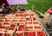 Szczegółowe wytyczne przy zatrudnianiu cudzoziemców w gospodarstwach