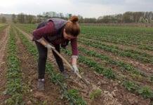 Brytyjczycy nie radzą sobie z pracą w polu