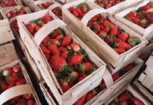 Serbia:  Marże za truskawki ustalone z góry?