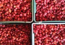 Hiszpania – zbliża się koniec sezonu, więcej truskawek trafia do przetwórstwa