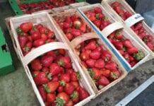 Dziś w Nowym Przybojewie brakowało truskawek  [Aktualne ceny]