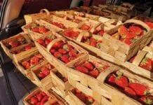 Od jutra zaczyna działać inspekcja kontrolująca jakość żywności – IJHARS