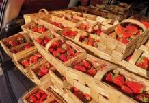 Ceny truskawek 2020: Dobry popyt na Broniszach