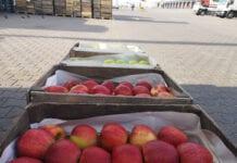 Ceny jabłek na Broniszach – relacja z rynku, 04.06.2020 [VIDEO]