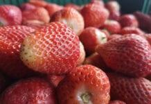 Jakość się opłaca – truskawki bez szypułki po 4,00 zł/kg