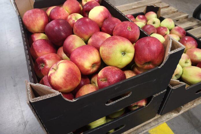 ceny jabłek 2021