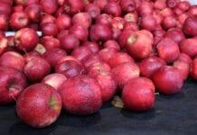 zapasy jabłek