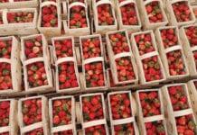 Dziś ceny truskawek wyraźnie w górę