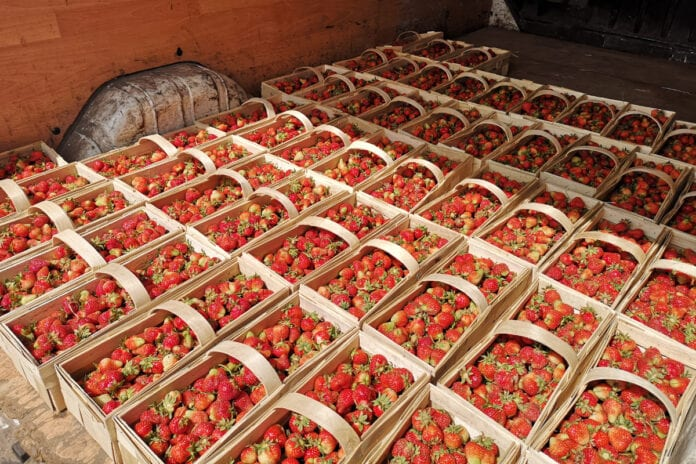 ceny truskawek w hurcie