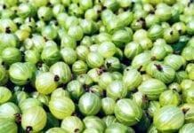 Problem niskich cen owoców miękkich