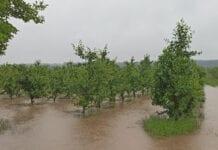 Pogoda nie odpuszcza. Kolejne podtopienia sadów i plantacji
